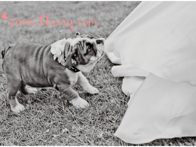 La Venta Spring Wedding Inspiration | Romeo the Puppy Ring Bearer