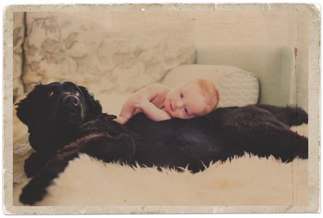 Dog and Baby Portraits | Zoom Theory