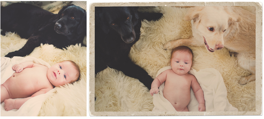 Newborn with Dogs | Zoom Theory